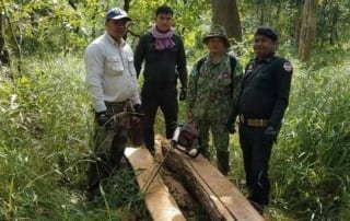 chambak - wildlife alliance rangers confiscated 2 chainsaws Chambak – Wildlife Alliance Rangers confiscated 2 chainsaws Illegal Logging Cambodia Asia 320x202