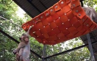 macaque playground Macaque playground Macaque hammok 2 320x202