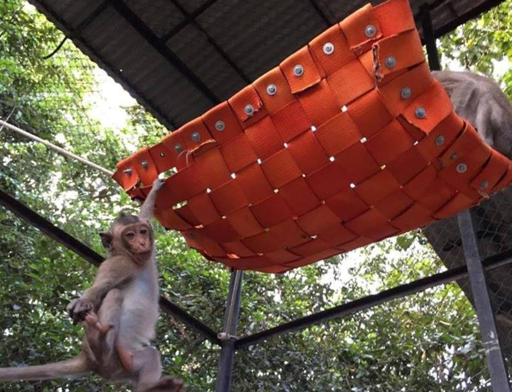 Macaque playground