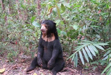 wildlife rehabilitation station – encouraging signs Wildlife Rehabilitation Station – encouraging signs Sun Bear Cambodia