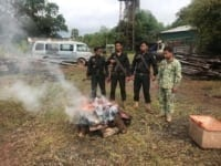 40 kg of bushmeat confiscated and destroyed 40 kg of bushmeat confiscated and destroyed Wild Boar Cambodia Rangers 200x150