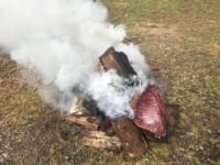 40 kg of bushmeat confiscated and destroyed 40 kg of bushmeat confiscated and destroyed Wild pig burned 200x150