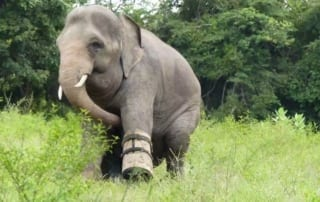 Silly Chhouk is having fun with his tire toy elephant Cambodia 320x202
