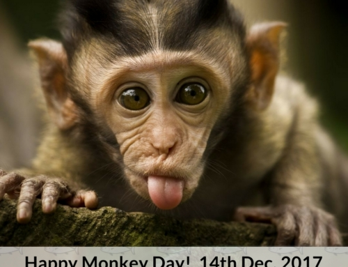🍌🍌🍌Happy International Monkey Day!