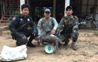 dead porcupine seized and incinerated Dead porcupine seized and incinerated Rangers work 320x202