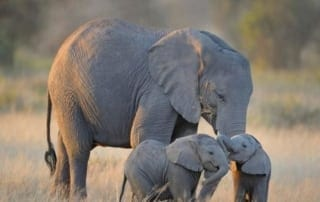 tell the eu: ban ivory! Tell the EU: ban ivory! Stop Ivory Trade 320x202