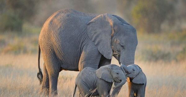 tell the eu: ban ivory! Tell the EU: ban ivory! Stop Ivory Trade