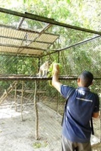 wildlife release station cambodia Wildlife Release Station Cambodia wildlife release station Cambodia keepers feeding time 200x300