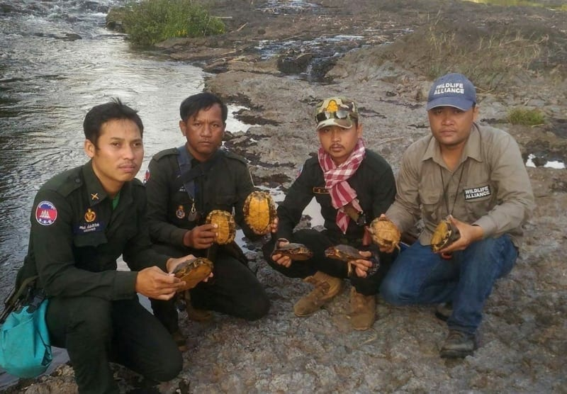 turtles release Turtles rescued and released – GPDS Global Park Defense System Forest RAngers release turtles 1 800x556