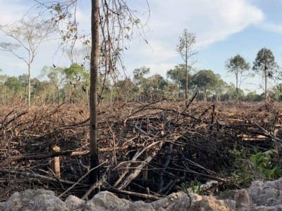 forest destroyed 8 hectares of forest destroyed! One excavator confiscated and 2 people in prison Forest destruction Cambodia 400x300