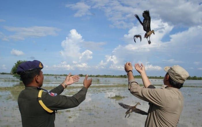 Sponsor a ranger station save wild birds 700x441