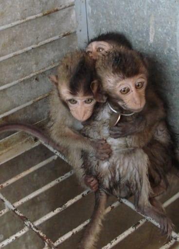 stop wildlife trafficking Stop Wildlife Trafficking save wildanimals