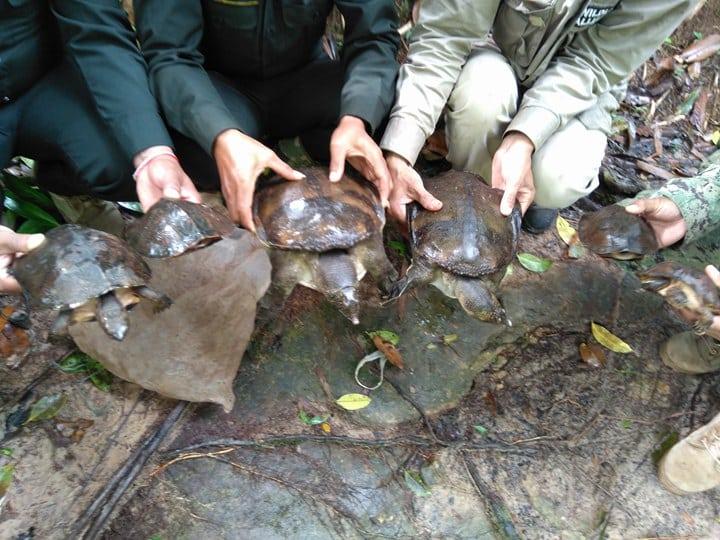 sponsor the asian elephant station Sponsor the Asian Elephant Station turtles released in the water