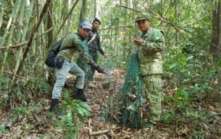 Huge quantities of traps for Critically Endangered pangolin removed from the forest 02