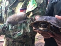 poaching Rangers combat poaching, human-wildlife conflict and the illegal pet trade 2018