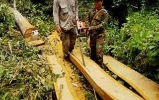 chambak Chambak Patrol Station declared war on illegal chainsaws Chainsaw illegal clearing Cambodia 1 320x202