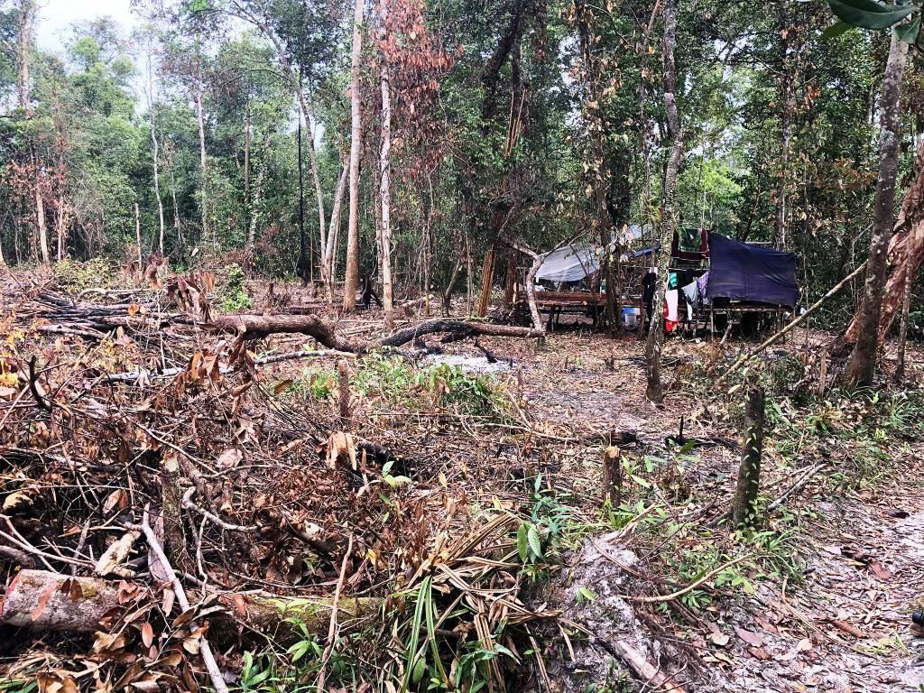 person detained One person detained for clearing state forest Clearing Forest destruction Illegal hut