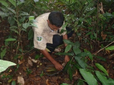 community rangers CAPU Community Rangers collecting snares 400x300