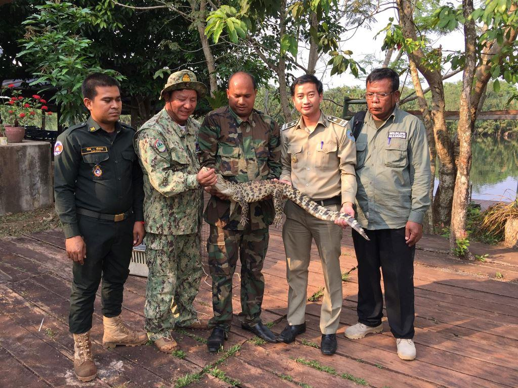 poaching Rangers combat poaching, human-wildlife conflict and the illegal pet trade Forest Rangers crocodile Cambodia