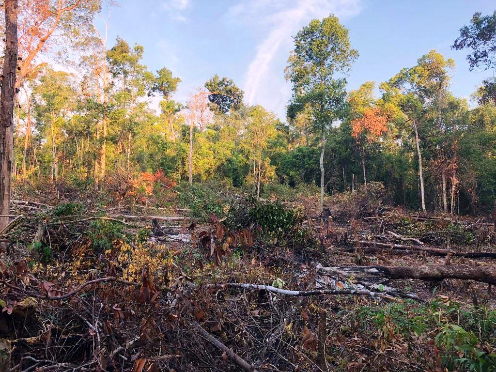 person detained One person detained for clearing state forest Forest destruction Cambodia