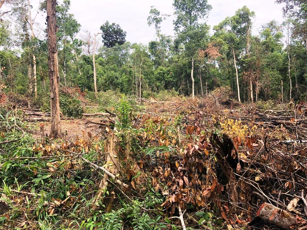 person detained One person detained for clearing state forest Forest destruction Sre Ambel