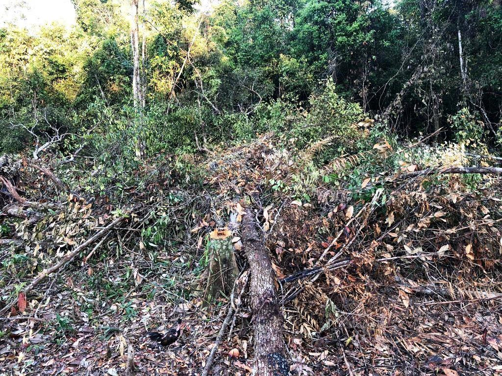 person detained One person detained for clearing state forest Forest destruction