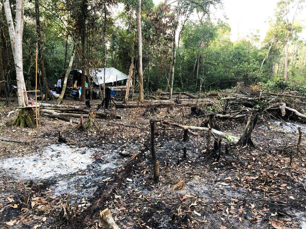 person detained One person detained for clearing state forest Illegal hut forest destruction