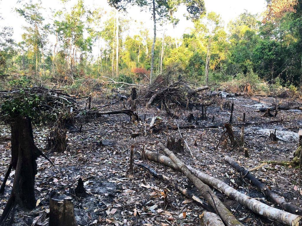 person detained One person detained for clearing state forest Logging forest destruction
