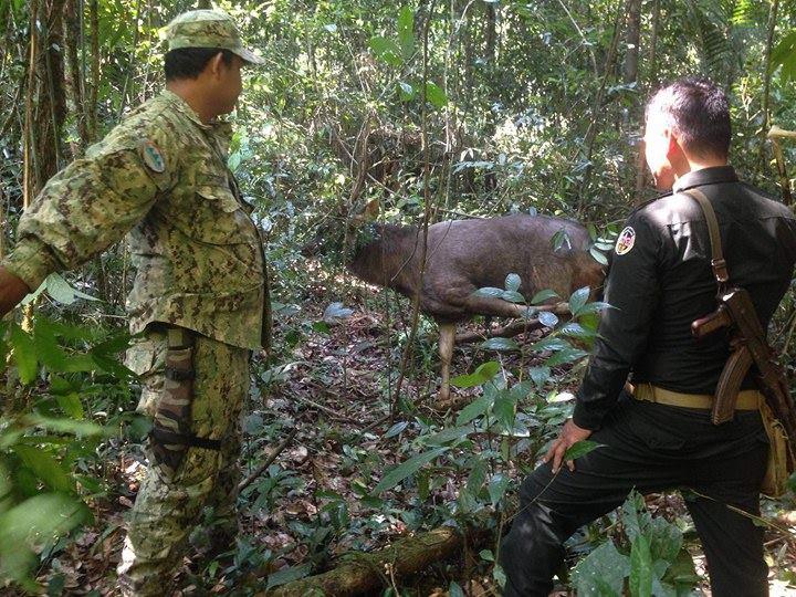 sponsor the sun bear station Sponsor the Sun Bear Station Rangers rescue a sambar deer