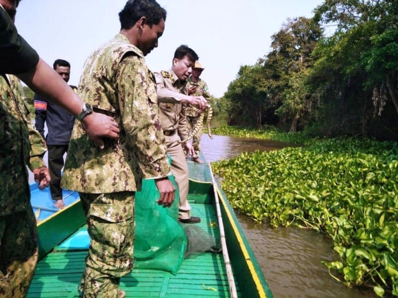 Wildlife seized in Pursat Wildlife seized in Pursat Wildlife Alliance Wildlife police releasing snakes in the river 800x600