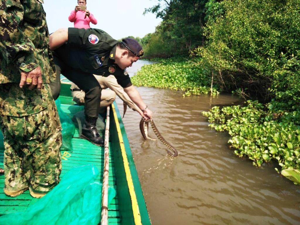Wildlife seized in Pursat Wildlife seized in Pursat Wildlife police cambodia snake release