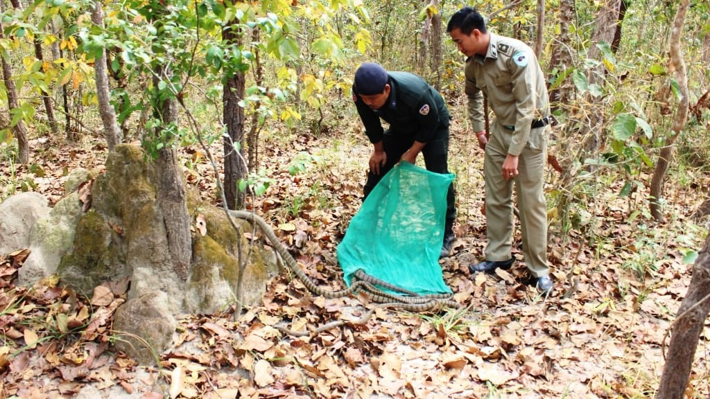 Wildlife seized in Pursat Wildlife seized in Pursat Wildlife seized in Pursat and released