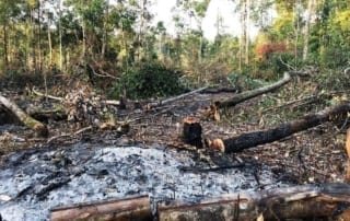 person detained One person detained for clearing state forest clearing Cambodia 320x202
