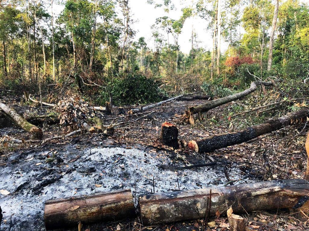 person detained One person detained for clearing state forest clearing Cambodia