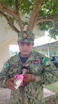 phnom tamao nursery Baby macaque brought to Phnom Tamao nursery Baby macaque brought to Phnom Tamao nursery 2 200x356