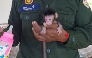 phnom tamao nursery Baby macaque brought to Phnom Tamao nursery Baby macaque brought to Phnom Tamao nursery 320x202 tamao wildlife rescue center Phnom Tamao Wildlife Rescue Center Baby macaque brought to Phnom Tamao nursery 320x202