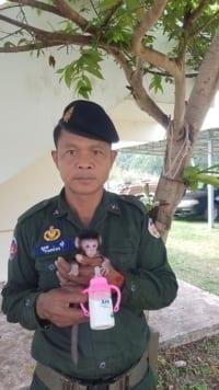 phnom tamao nursery Baby macaque brought to Phnom Tamao nursery Baby macaque brought to Phnom Tamao nursery 5 200x356