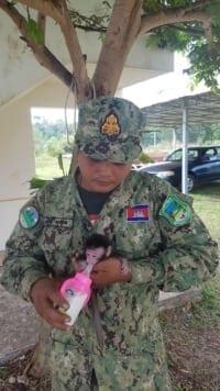 phnom tamao nursery Baby macaque brought to Phnom Tamao nursery Baby macaque brought to Phnom Tamao nursery 6 200x356