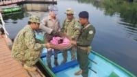 phnom tamao nursery Baby macaque brought to Phnom Tamao nursery Baby macaque wildlife alliance rangers 200x113