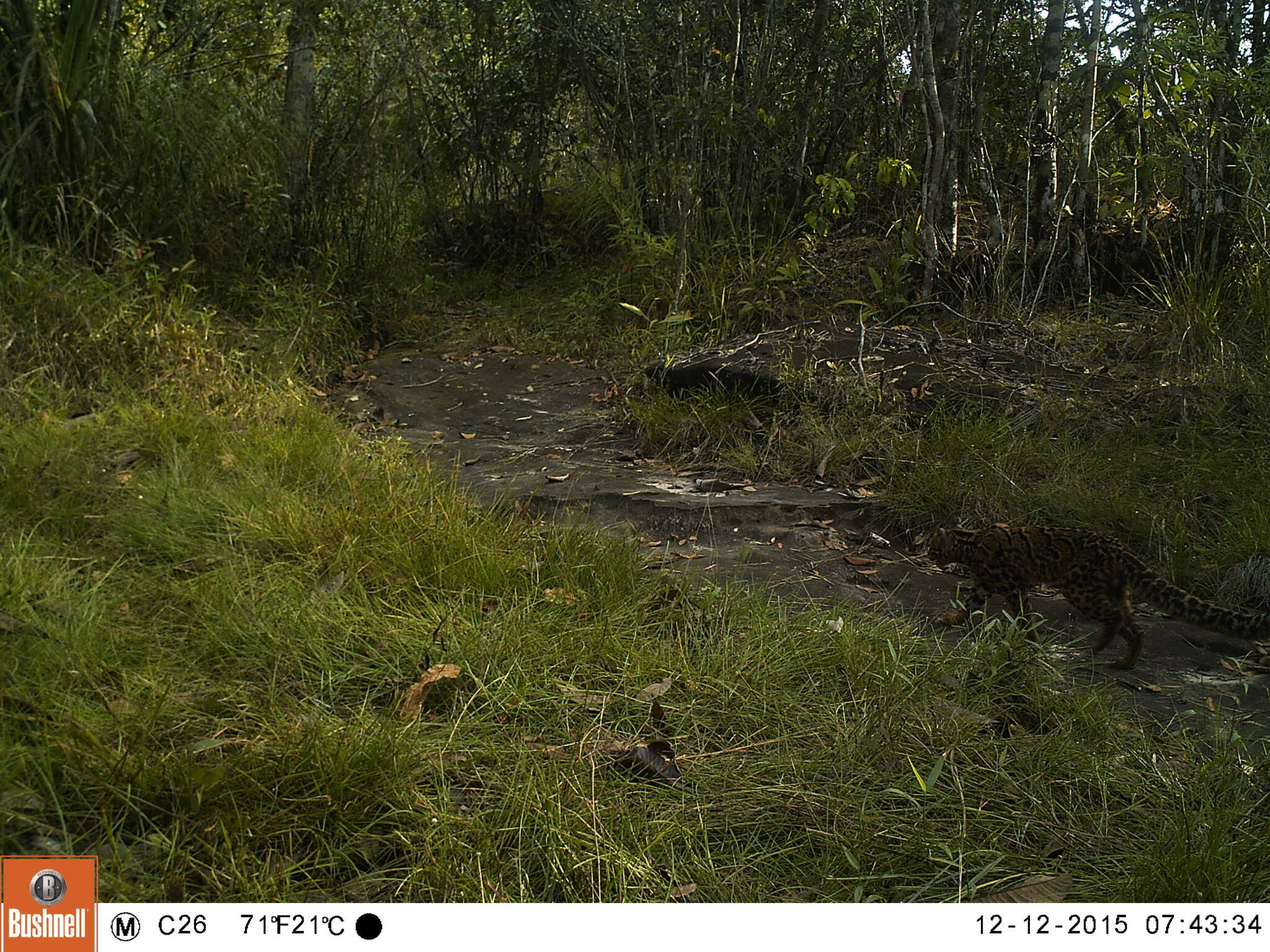 Monitoring Tropical Forest Ungulates Using Camera Trap Data