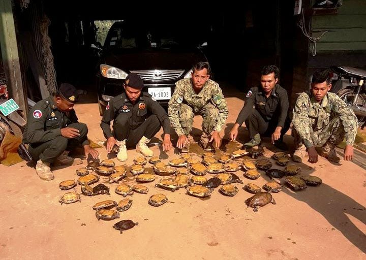 the rangers stopped a car transporting 57 turtles The rangers stopped a car transporting 57 turtles Wildlife Alliance rangers capture car with wildlife