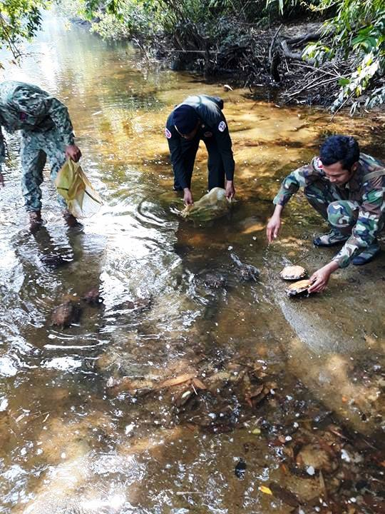 the rangers stopped a car transporting 57 turtles The rangers stopped a car transporting 57 turtles relasing turtles back into water