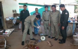 wildlife rescue Endangered Tortoise Rescued and Bushmeat Confiscated from Wildlife Trafficker 2018