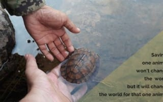 Are some animals more worth saving than others? Saving the world one turtle at the time 320x202 newsletter Newsletter Saving the world one turtle at the time 320x202
