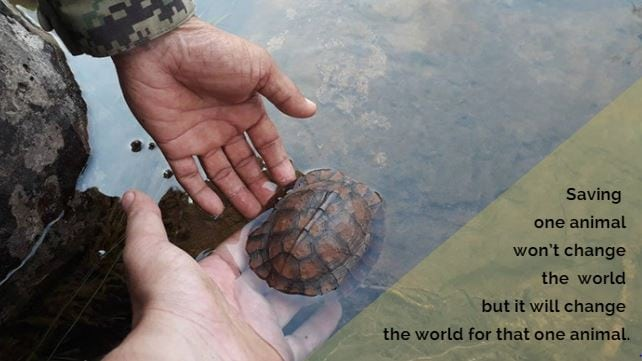 cardamom mountains Are some animals more worth saving than others? Saving the world one turtle at the time