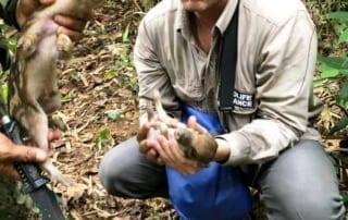 newsletter Newsletter Wildlife Alliance rangers save wild pig Cambodia 320x202