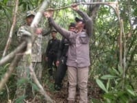 sanares Sun Bear Station dismantle 135 snares animal traps 200x150