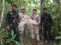 sanares Sun Bear Station dismantle 135 snares hundrets of snares remouved by wildlife alliance rangers 200x150