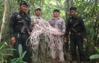 #snared #Snared hundrets of snares remouved by wildlife alliance rangers 320x202