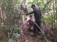 sanares Sun Bear Station dismantle 135 snares sun bear station remouving snares 200x150